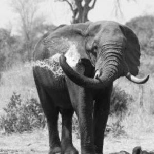 Elephants bathing at Imbali Waterhole.