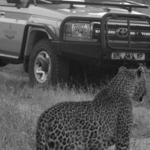 Wabayisa close to Imbali Safari Lodge being enjoyed by guests from Hamiltons