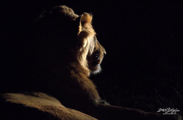 Lion around… Travel & Things with David Batzofin