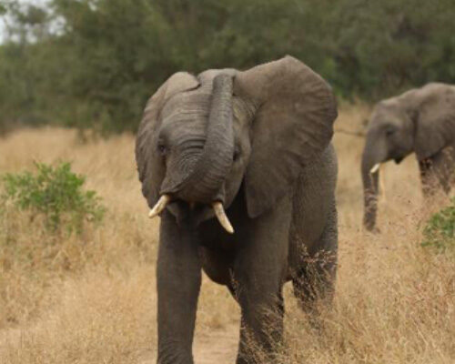 Have an itch to scratch – the trunk is an amazing tool to be used