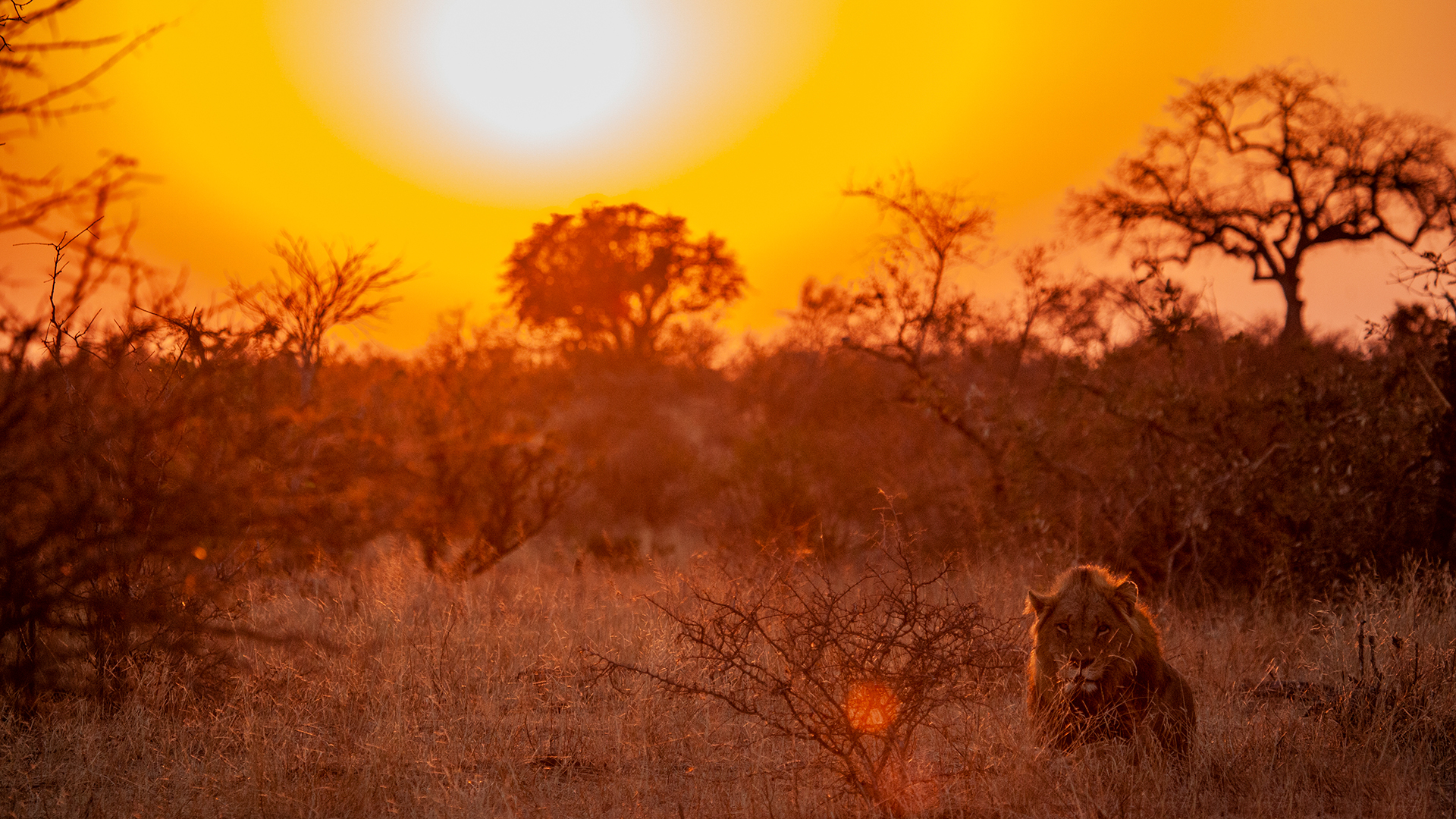 World Lion Day: Saving South Africa's Legacy through Protected Areas