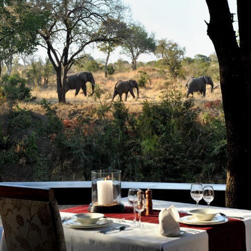 Imbali-dining-elephants