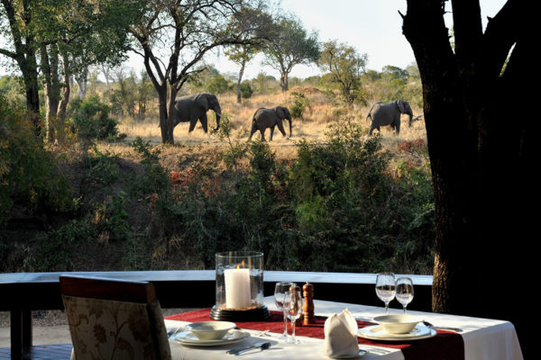 Imbali-dining-elephants