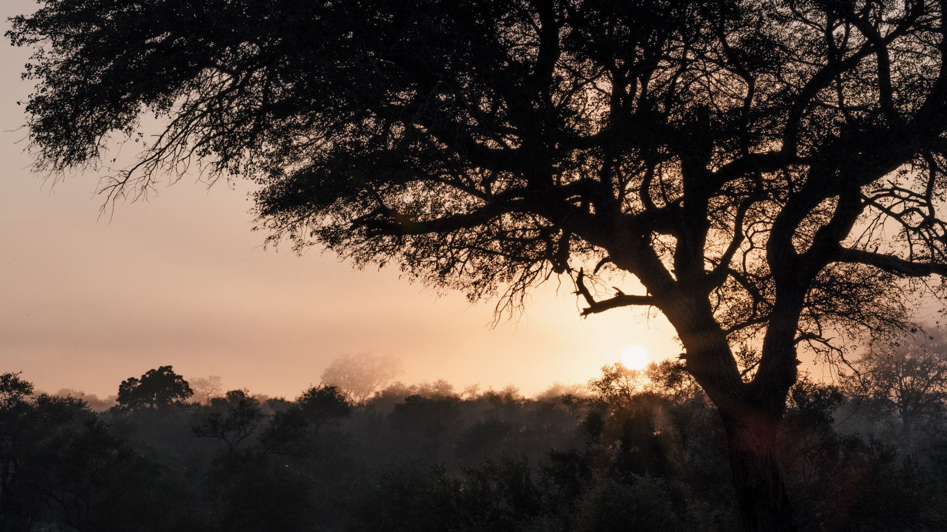 All You Need to Know about Honeymooning in Kruger National Park