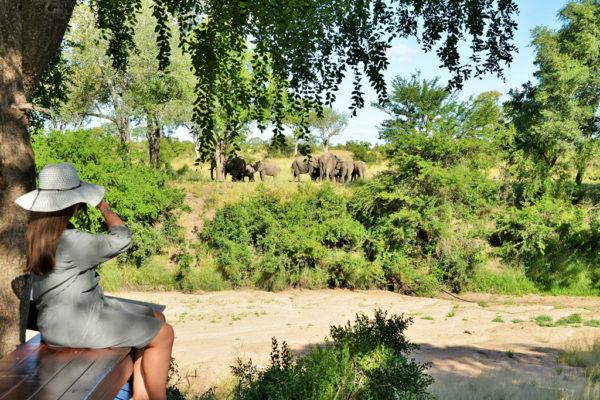 Imbali-Safari-Lodge-Elephant-View