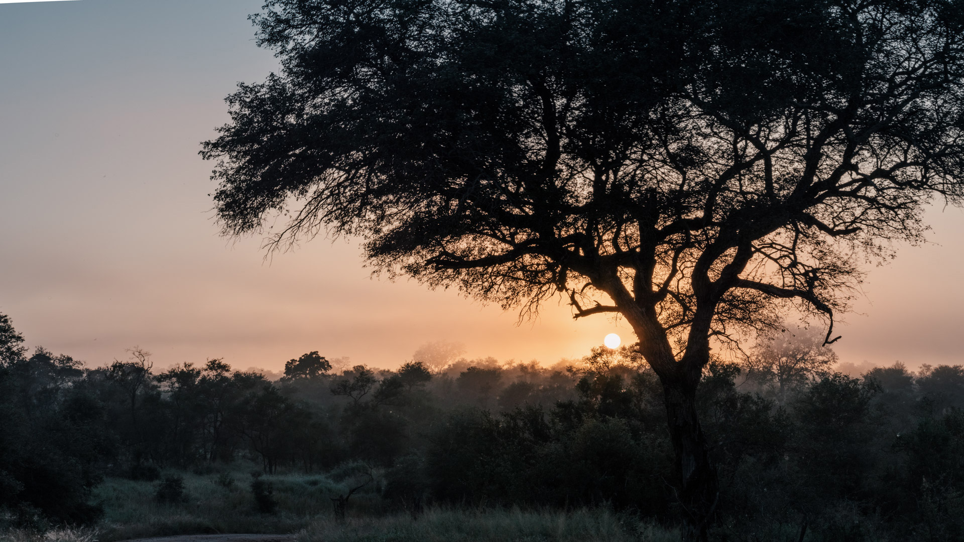 Kruger National Park – Mluwati Private Concession